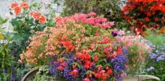 Κήπος Διαγωνισμός Φωτογραφίας «Κήποι και Μπαλκόνια»